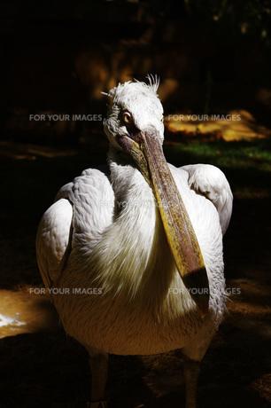 鳥の写真素材 [FYI00328574]