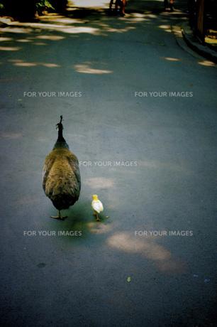 鳥の写真素材 [FYI00328597]