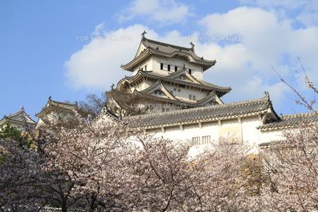 桜と姫路城の写真素材 [FYI00328756]
