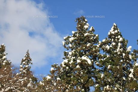 雪国の青空の写真素材 [FYI00328935]