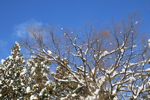 雪国の青空の素材 [FYI00328939]