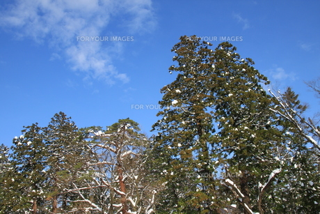 雪国の青空の写真素材 [FYI00328940]
