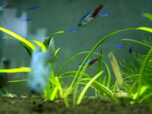カラフルな熱帯魚の写真素材 [FYI00328945]