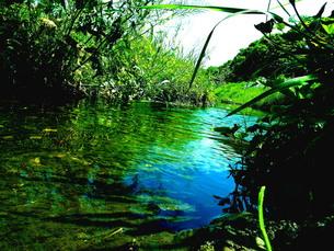 ジャングルの様な川の写真素材 [FYI00328964]