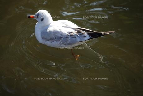 遊泳の写真素材 [FYI00329096]