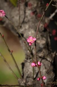 初春の素材 [FYI00329112]
