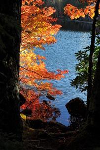 標高2100mの紅葉の写真素材 [FYI00329264]