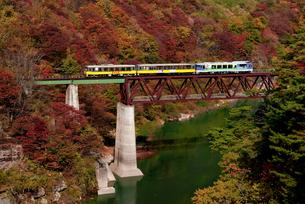 会津の紅葉とトロッコ列車の写真素材 [FYI00329290]