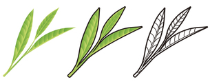 お茶の葉の写真素材 [FYI00329369]