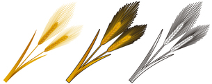 小麦の写真素材 [FYI00329380]