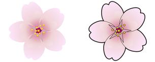 サクラの花の写真素材 [FYI00329384]