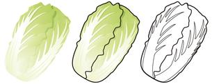白菜の写真素材 [FYI00329395]