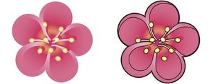 梅の花の写真素材 [FYI00329397]