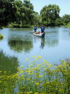 オミナエシと舟の写真素材 [FYI00329597]