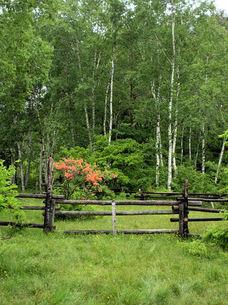 雨の乗鞍高原、牧場の柵、レンゲツツジの写真素材 [FYI00330178]