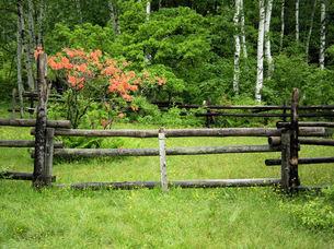 乗鞍高原、雨の牧場とレンゲツツジの写真素材 [FYI00330181]