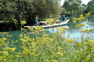 オミナエシと舟遊びの写真素材 [FYI00330309]