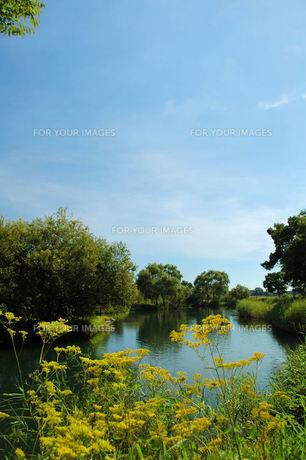 オミナエシと静かな川面の写真素材 [FYI00330317]