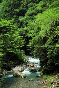 渓谷・夏・板取の写真素材 [FYI00331189]