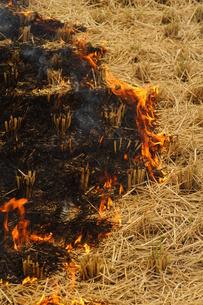 田を焼く、農作業の写真素材 [FYI00331392]
