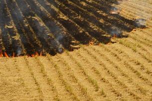 田を焼く、農作業の写真素材 [FYI00331394]