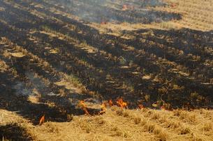 初冬の農作業、田を焼くの写真素材 [FYI00331398]