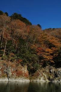 穏やかな川と紅葉の写真素材 [FYI00332191]
