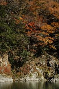 紅葉と川の写真素材 [FYI00332195]