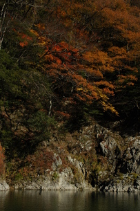 秋の川と紅葉の写真素材 [FYI00332202]