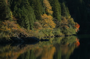 秋の湖面に映る紅葉の写真素材 [FYI00332212]