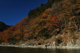 秋の飛騨川と紅葉の写真素材 [FYI00332216]