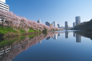 皇居外濠の桜並木の写真素材 [FYI00333418]