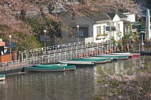 皇居外濠のボート乗場の写真素材 [FYI00333423]