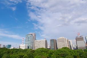 皇居東御苑から望む大手町のビル街の写真素材 [FYI00333501]