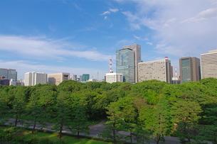 皇居東御苑から望む大手町のビル街の写真素材 [FYI00333508]
