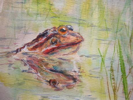 水につかるカエル 「い?湯だな」の素材 [FYI00333645]