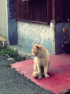 座る野良猫の素材 [FYI00333649]