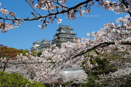 姫路城の写真素材 [FYI00333787]