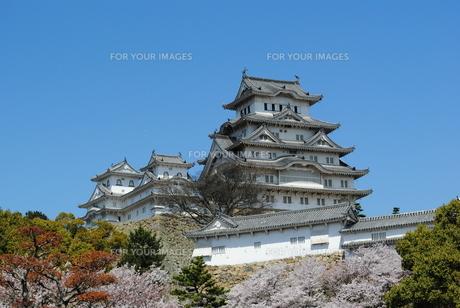 姫路城の写真素材 [FYI00333795]