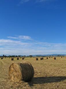 青空と牧草ロールの写真素材 [FYI00333813]
