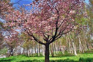 北国の春、農家の庭園の素材 [FYI00333841]