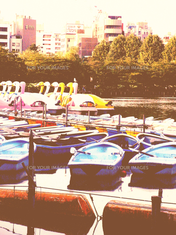 ボート池の写真素材 [FYI00333863]
