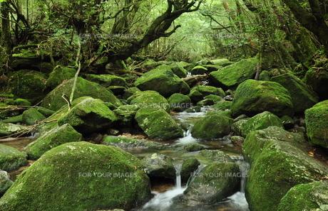 屋久島の大自然の写真素材 [FYI00333893]