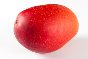 赤いマンゴーの素材 [FYI00333911]