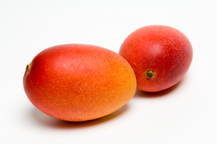 熟したマンゴーの写真素材 [FYI00333933]