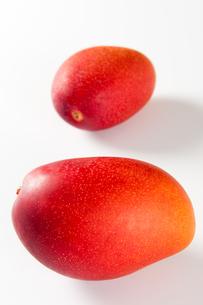2個のマンゴーの写真素材 [FYI00333949]