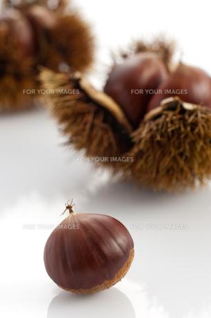 茶色の栗とイガグリの素材 [FYI00333984]