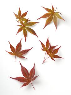 紅葉の写真素材 [FYI00334016]