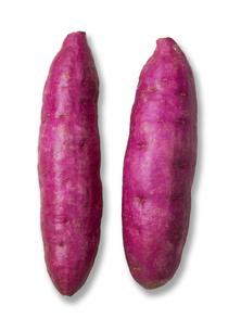 サツマイモの写真素材 [FYI00334427]