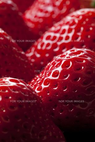 苺の写真素材 [FYI00334537]